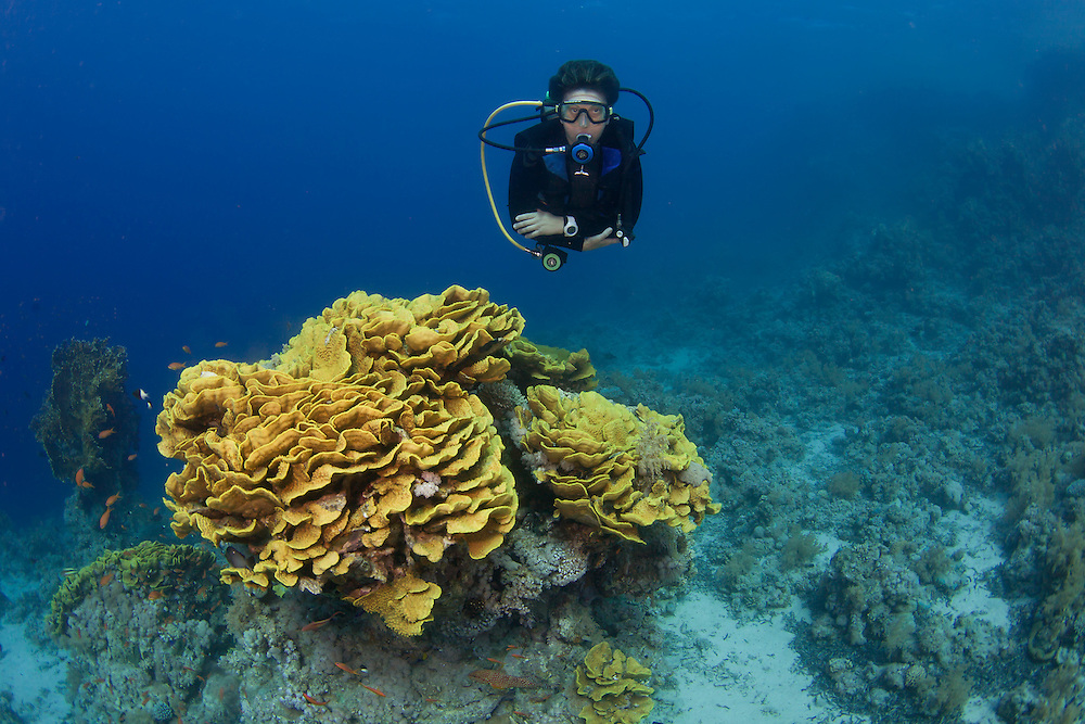 Diver and coral bommie near the wreck of the Jolanda, Ras Mohamed, Red Sea