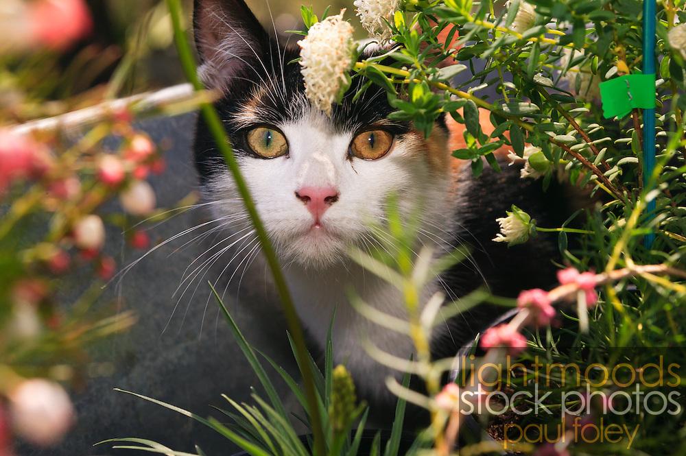 Kitten hiding in flowers in wheelbarrow