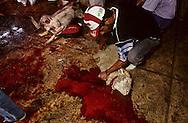 France. Marseille. The sacrifice of sheep in a slaughter house for the Muslim  Aid  feast  Marseille  France    /sacrifice du mouton dans les abattoirs pour la fête de l Aid  Marseille  France  /R00015/13    L2818  /  P0004017