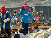 10 FEBRUARY 2016 - BAN LAEM, PHETCHABURI, THAILAND: Workers walk among piles of salt ready to be harvested at the beginning of the salt harvest in Phetchaburi province, Thailand. The salt harvest in Thailand usually starts in February and continues through May. Salt is harvested in many of the provinces along the coast, but the salt fields in Phetchaburi province are considered the most productive. The salt fields are flooded with sea water, which evaporates off leaving salt behind. Salt production relies on dry weather and producers are hoping the current drought will mean a longer harvest season for them.      PHOTO BY JACK KURTZ