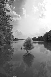 Peaceful scene at a lake in South Carolina