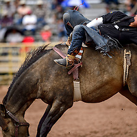 Ferlin Tsosie holds on for a 73-point bareback ride during the Navajo Nation Fair rodeo at the Navajo Nation Fairgrounds in Window Rock Saturday.
