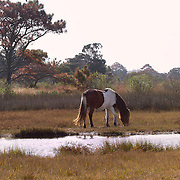Assateague Island National Park Reserve Collection<br />