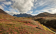 Peak autumn colors at Ram Valley in Chugach State Park in Southcentral Alaska. Afternoon.