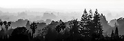 Panorama of ridges of trees fading into the sunset mist in sSilicon Valley, CA