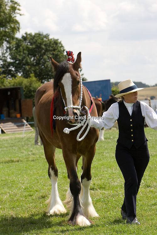 Shire Horses at Woolley Horse Show 2009