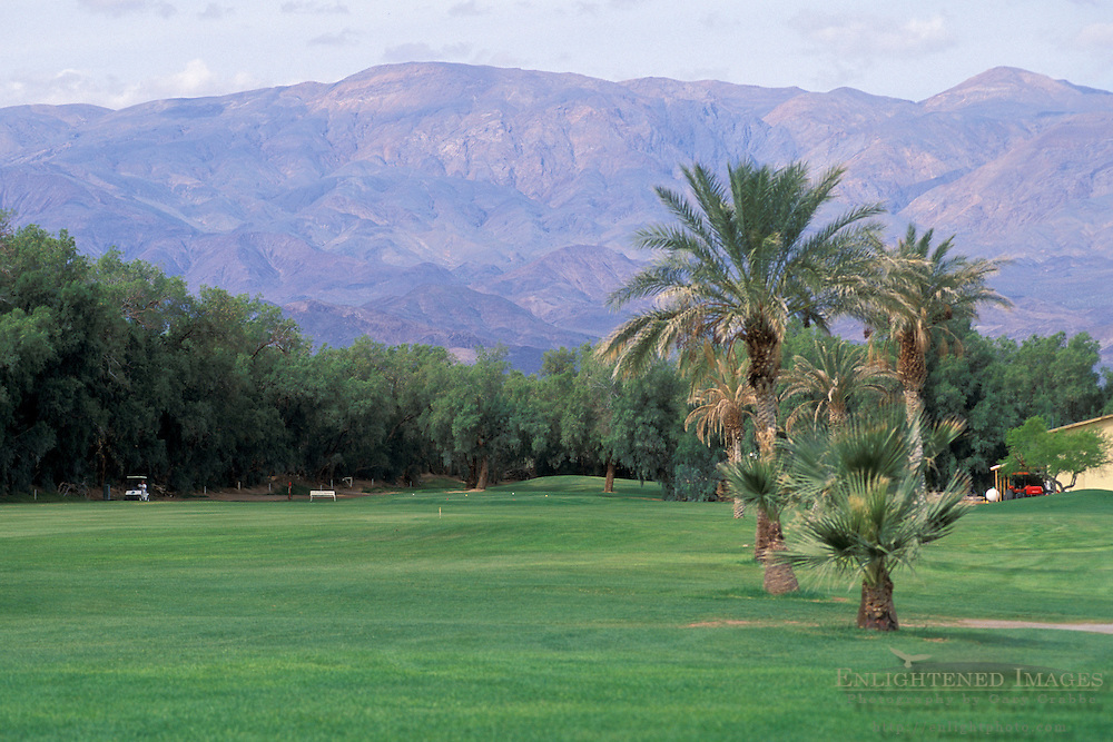 Green grass fairway and palm tree at Furnace Creek Golf Course, Death Valley National Park, California