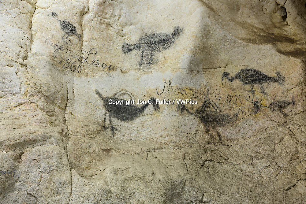 Historic graffiti from the 1800's in the Pomier Caves alongside ancient indigenous pictographs.  The Pomier Caves are a series of 55 caves north of San Cristobal in the Dominican Republic.  They contain over 6000 drawings, pictographs, and petroglyphs of the Pre-Columbian Taino, Caribe, and Igneri cutlures.  It is the largest oncentration of ancient rock art in all the Caribbean Basin.  Some of the paintings are up to 2000 years old.  Cave Number 1 contains 590 painted figures of animals, birds, fish, reptiles and people.  The paint was a mixture of charcoal and animal fat.