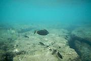 Oahu. Snorkeling at Hanauma Bay.