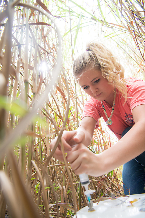 biofuel, Ridges, sarah davis, Undergraduate Research Sarah Davis, Biofuel, Ridges, Voinovich School