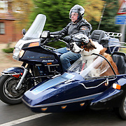 "PIC BY GEOFF ROBINSON PHOTOGRAPHY 07976 880732...PIC SHOWS HARLEY THE ST BERNARD WITH OWNER ALAN VALKEITH GOING FOR A RIDE IN HIS  SIDECAR IN TURVES NEAR PETERBOROUGH ON THURSDAY 3 NOV... A petrol head pooch is living life in the fast lane after his motorbike-mad owners bought him his own SIDECAR...Harley, a 17-month-old St Bernard, even has his own crash hat and doggles to go ""motorbarking"" on the side of the Honda Gold Wing 1200 at speeds of up to 55mph...Owners Alan and Tina Valkeith, who are both retired, bought the bike and side car because they couldn't bear to leave 12-stone Harley at home when they went out...Now the thrill-seeking pup accompanies them on two or three outings a week shopping in the nearby city of Peterborough and has even gone for a seaside day trip to Hunstanton in Suffolk...""We are both keen on motorbiking and didn't want to give up our hobby once we got Harley as one of us would have had to stay at home and look after him,"" said Tina, 47, from Turves, near Peterborough, Cambs...SEE COPY CATCHLINE St Bernard dog has own sidecar."