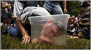 "East Dublin, Ga. - July 9, 2005: In a stunning upset, Melvin Davis loses his title in the ""Redneck Bobbing for Pigs Feet"" contest during The Tenth Annual Summer Redneck Games in East Dublin, Ga. July 9. 2005. (Photo/Stephen Morton)"