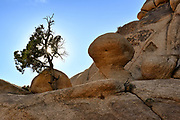Boulders at Joshua Tree National Park