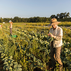 Women harvest kale on a farm on Kinney Hill in South Hampton, New Hampshire.