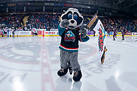 KELOWNA, CANADA - FEBRUARY 23:  Rocky Raccoon, the mascot of the Kelowna Rockets stands on the ice against the Kamloops Blazers on February 23, 2019 at Prospera Place in Kelowna, British Columbia, Canada.  (Photo by Marissa Baecker/Shoot the Breeze)