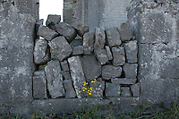 stone wall on the Aran Islands County Galway Ireland