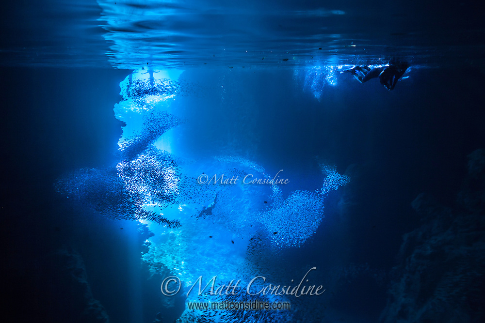 Freediver diving deep through schools of fish with snorkelers on the surface. (Photo by Underwater Photographer Matt Considine)