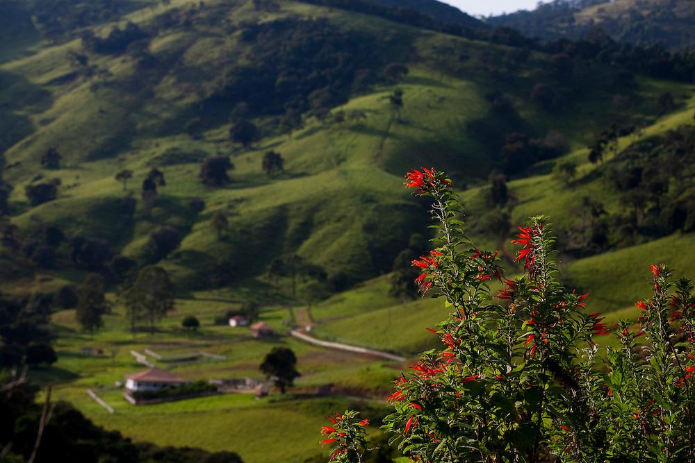 Camanducaia_MG, Brasil...Flores, com uma paisagem com fazenda ao fundo, em Camanducaia...Flowers with a farm in the background in Camanducaia...Foto: LEO DRUMOND / NITRO.....
