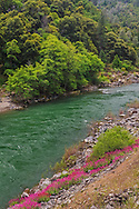 The Trinity River, Trinity County, California