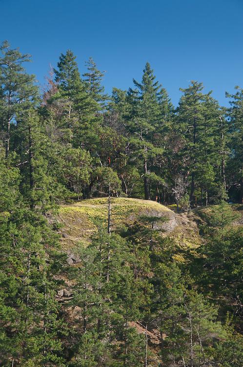 Forest and Rock, Stuart Island, Washington, US