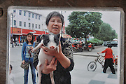 JIANHU, CHINA - APRIL 11: (CHINA OUT) <br /> <br /> 61kg Pet Pig In Jiangsu<br /> <br /> A photograph showing Tao Liqin and her pet pig on April 11, 2014 in Jianhu, Jiangsu Province of China. Tao\'s granddaughter spent 700 yuan (106 USD) to buy the pet pig, who was 1kg in weight, online last year. And it suddenly started to grow after being castrated.©Exclusivepix
