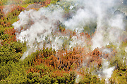 Suffering from high temperatures and drought in the summer of 2007, northern Florida and Georgia fell victim to hundreds of forest fires.  As a result of higher temperatures from climate change, forest fires will become increasingly frequent and difficult to manage.