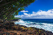 Rocky coastline along the Puna Coast, Pahoa, The Big Island, Hawaii USA