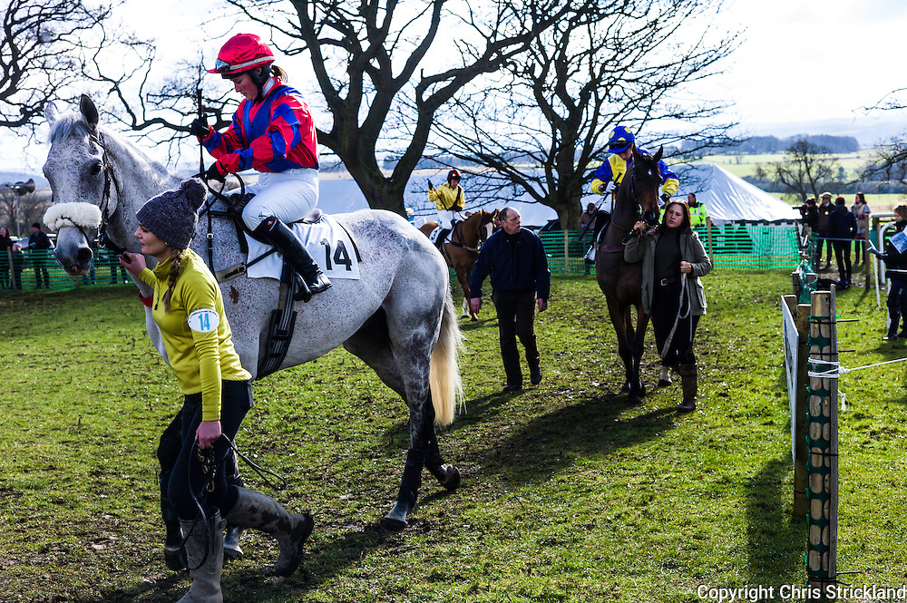 Corbridge, Northumberland, England, UK. 28th February 2016. ProbablyGeorge and jockey Kelly Bryson in the paddock at he Tynedale Hunt annual Point to Point horse racing fixture.