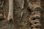 24/09/2017. A bullet lays surrounded by bones as archeologists work at a mass grave known as 'La Fosa de los Maestros' (The teachers' mass grave) containing the bodies of 7 people in a field in Cobertelada on September 24, 2017 near Almazan, in Soria province, Spain. The seven people where allegedly assassinated on August 25, 1936 after being take from prison of Almazan during the Spanish Civil War by Falangists, as part of General Francisco Franco armed forces. The remains are supposed to belong to teachers in the region, who were also friends of Spanish writer Antonio Machado. The exhumation was done by members of ARANZADI and La asociacion Soriana Recuerdo y Dignidad (ASRD) 'The Soria Association for Memory and Dignity'. Spain's Civil War took the lives of thousands of people on both sides and civilians, but Franco continued his executions after the war has finished. Teachers, as part of the education sector, were often a target of Franco's forces. Spanish governments has never done anything to help the victims of the Civil War and Franco's dictatorship while there are still thousands of people missing in mass graves around the country. (© Pablo Blazquez)