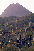 02262 Tucson Mountain Park AZ Arizona saguaro cactus sunset couple cityscape desert clouds