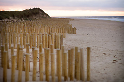 Erosion prevention measures on the beach at Thornham, North Norfolk Coast, England, UK.