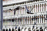 Pigeons flying in San Marco Square Venice Italy