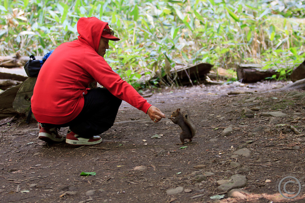A local man feeds a Japanese Red Squirrel at Mt Maruyama, near the heart of Sapporo in Hokkaido, Japan.