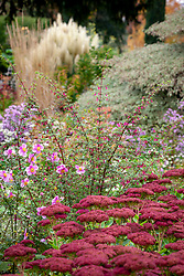Fuchsia microphylla - small-leaved fuchsia - in a border at Pettifers with Sedum 'Autumn Joy' syn. Sedum Herbstfreude Group and Anemone x hybrida - Japanese anemone.