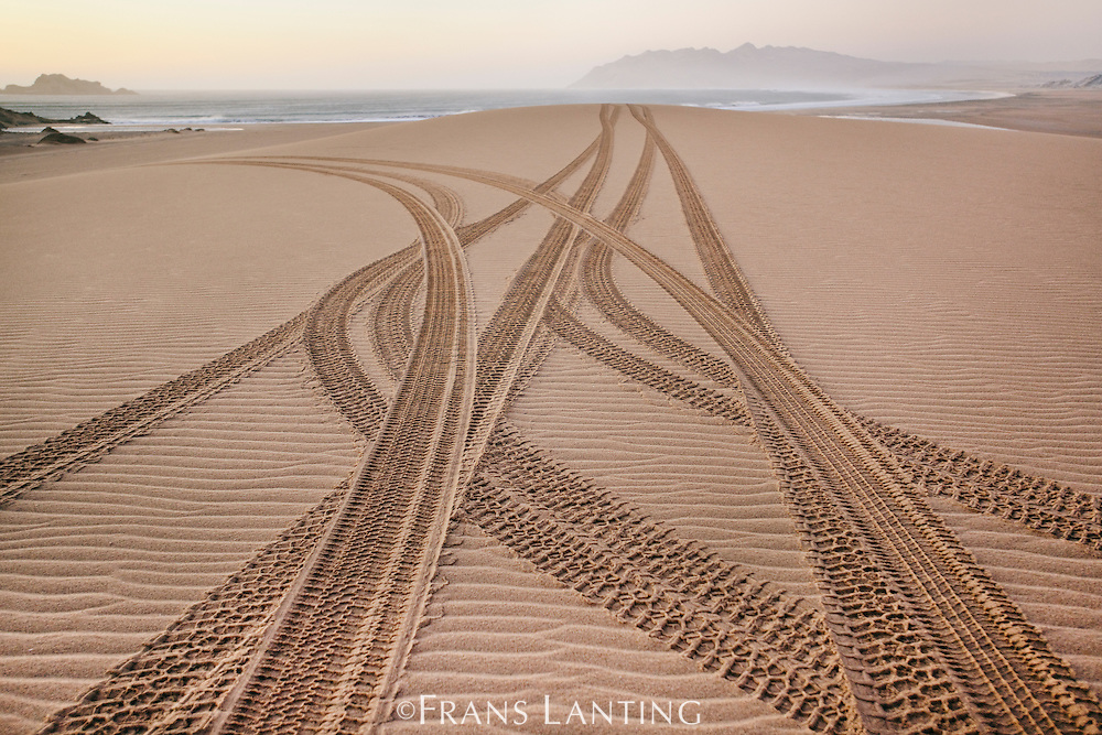 Car tracks on beach, Namib-Naukluft National Park, Namibia