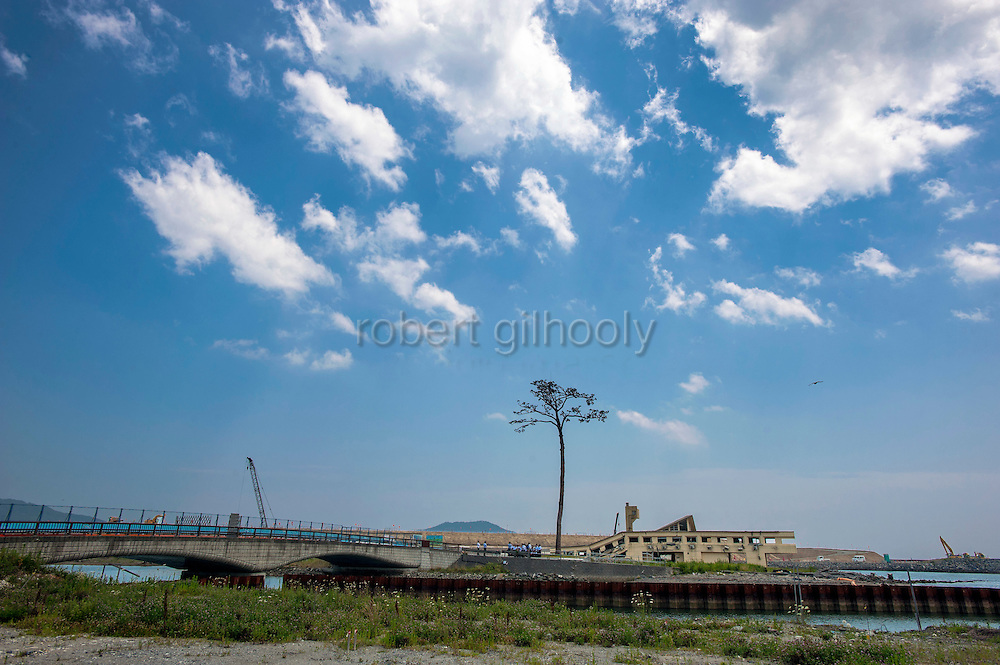 """Photo shows the single black pine tree -- dubbed the """"miracle pine"""" -- that stands on the waterfront of  Rikuzentakata city, Iwate Prefecture, Japan. The tree was one of several thousand black pines that formed a protective wall along the waterfront of the Pacific coast city, but were flattened following the March 2011 tsunami. It is one of just a few landmarks that remain as the city undergoes a massive rebuilding project.  Rob Gilhooly Photo"""