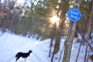Trail marker on snow covered trail with black and white dog