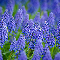 Wildflowers55