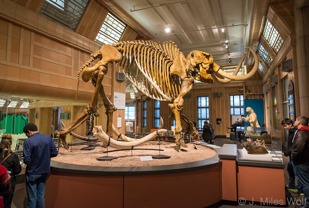 Mammoth Skeleton in the Natural History Museum at Union Terminal