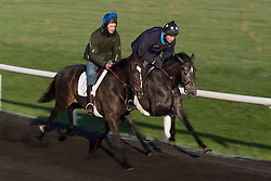 Conor Murphy is the, 20 something Irishman, who won an impossible bet that turned $50 into nearly $2 million. He moved to Louisville, bought a house and is now a trainer on his own. ..More Than Ready with Justin Curran up, left, works out with TheyWayYouAre with Conor Murphy up, Thursday, April 25, 2013 at Skylight Training Center in Goshen.