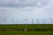 Sheep and young lambs grazing on the marshland next to the Little Cheyne Court Wind Farm on Romney Marsh, Kent, United Kingdom. Romney sheep have many characteristics that enable them to live on the wetlands, including black hooves resistant to footrot and resistance to internal parasites. (photo by Andrew Aitchison / In pictures via Getty Images)