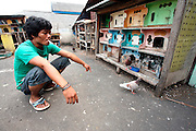 On the roof of Jakarta's largest bird market a man sells homing pigeons. With recent outbreaks of Bird Flu in Indonesia, authorities have looked to relocate this market to somewhere less densely populated but have been met with tough resistance from the shop owners.