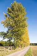 Line of trees blue sky autumnal colours, Milestone House, near Calne, Wiltshire, England, UK
