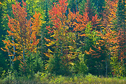 Boreal forest in autumn<br />