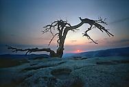 The lone Jeffrey Pine on Sentinel Dome at sunset, Yosemite National Park, California.   9-6-1988