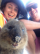 Quokka Selfie Is Cutest Trend<br /> <br /> The Quokka, an irrestistibly adorable and happy-looking marsupial native to Australia, is now at the epicenter of what is possibly the cutest trend we've ever seen – the Quokka selfie.<br /> Due to their 'vulnerable' status in the IUCN Red List, handling these critters is a crime, but they are not afraid of humans and will readily approach them, so taking a selfie with one shouldn't be too difficult. And given how happy they always looks, it's almost like they like the attention!<br /> ©Quokka Selfie/Exclusivepix Media