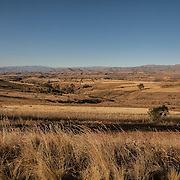 Wheat fields near Anzaldo, in the Bolivian Andes