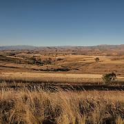 Wheat fields near Anzaldo, in the Bolivian Andes