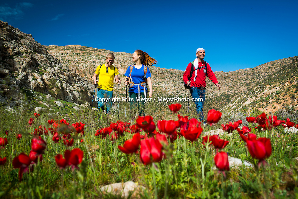 Palestine, March 2015. Hikers on the trail in Wadi Jahar between Taqua and Reshayda. The Abraham Path is a long-distance walking trail across the Middle East which connects the sites visited by the patriarch Abraham. The trail passes through sites of Abrahamic history, varied landscapes, and a myriad of communities of different faiths and cultures, which reflect the rich diversity of the Middle East. Photo by Frits Meyst / MeystPhoto.com for AbrahamPath.org
