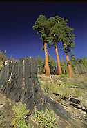 The Sierra In Peril